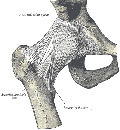 liofemoral-ligament.png